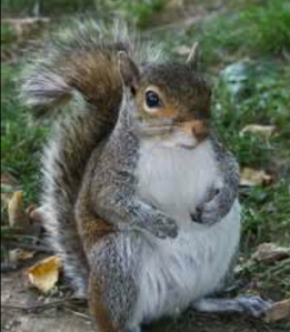 Why is there a picture of a squirrel on this post? Listen to the podcast and find out.